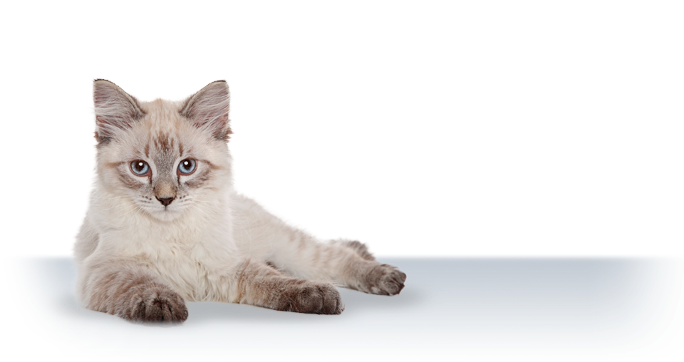 3_Banner_CatMatters2.png