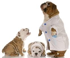 bulldogdocs.jpg