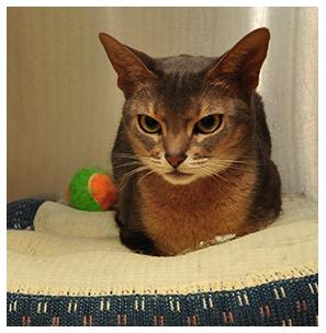 feline-wellness-care-parkview-pet-clinic.jpg