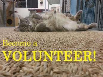 Become_a_volunteer.jpg
