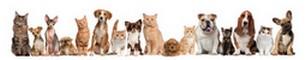 000018741378-pets-in-a-row.jpg