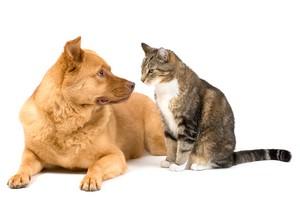 companion-pet-photos-1.jpg