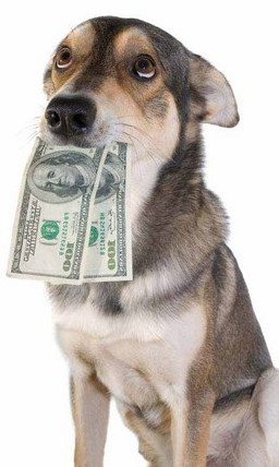money-dog1.jpg