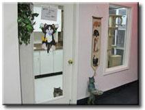 cat-boarding-room.jpg