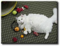 fluffy-cat.jpg