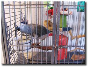gray-parrot.jpg