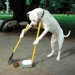 dogtraining-150x150.jpg