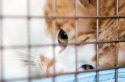 Las Vegas cat veterinarians provide reasons to spay or neuter cats
