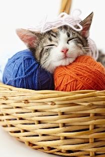 senior cat care from Las Vegas cat clinic.jpg