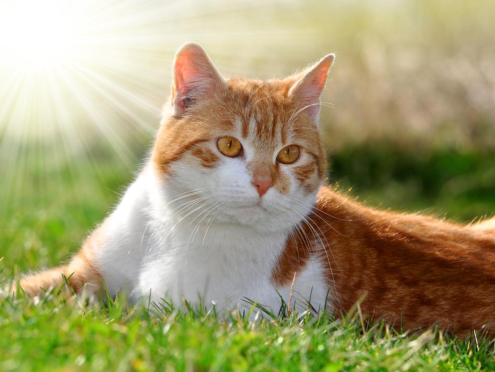 kitten with catnip