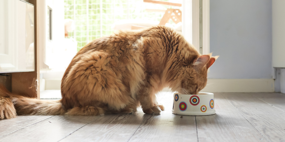 Nutritional Counseling Could Give Your Pet a New Lease on Life