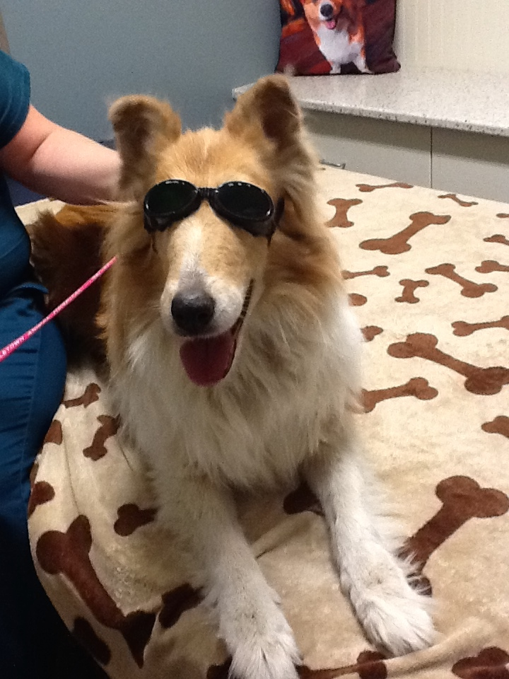 patient with Doggles receiving Class IV Laser Therapy