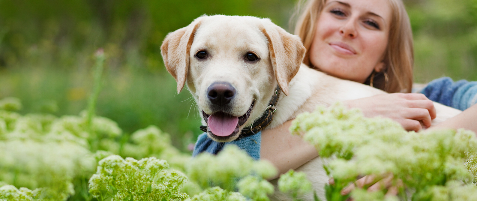 pet nutrition counseling from your cary veterinarian