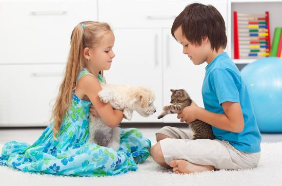 radford puppy & kitten care