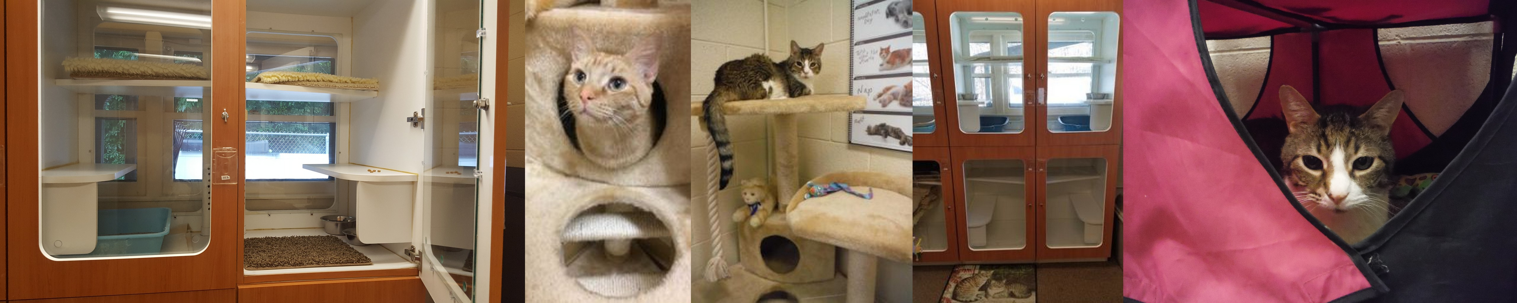A secluded room for our feline friends offers peace and quiet from the normally noisy   kennels.