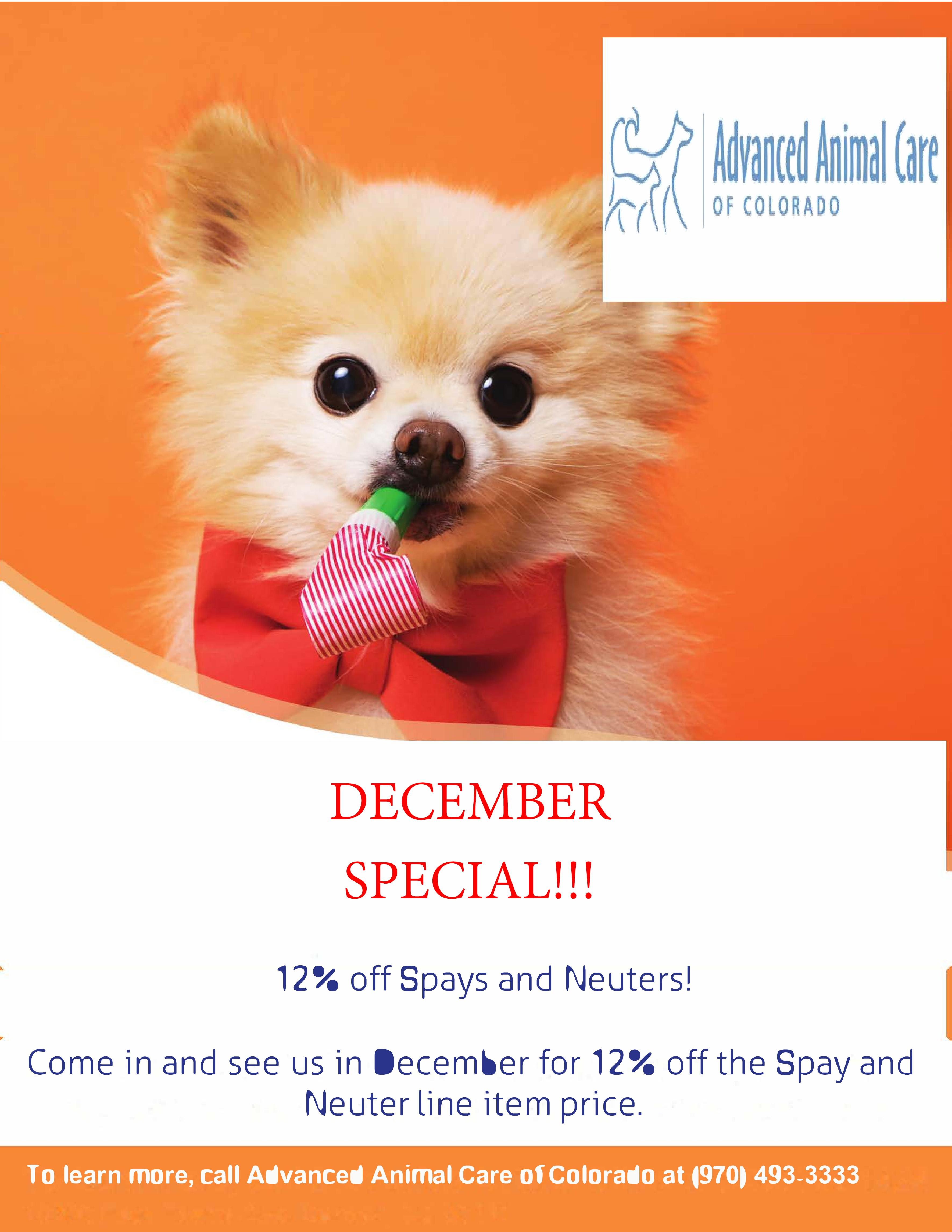 12% Off Spays and Neuters!*