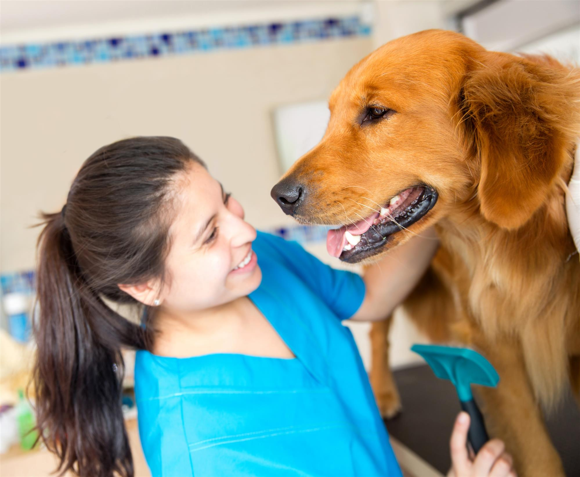 Dog Health and Dentists