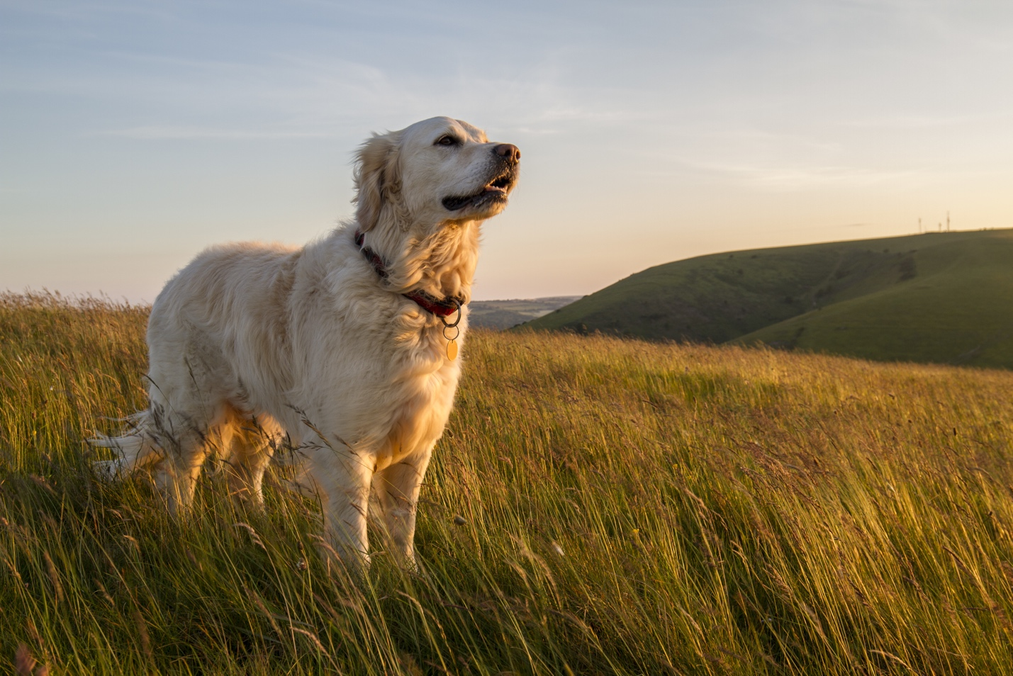 Dog standing in field