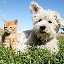 a_small_dog_and_cat_play_in_the_grass.jpg