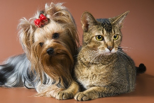 dog-cat-surgery-at-duncdelvet