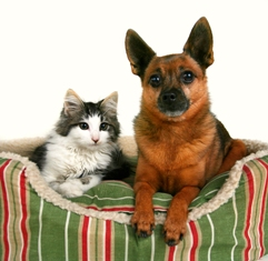 bigstock_a_dog_and_a_kitten_in_a_pet_be_19386641Resized.jpg