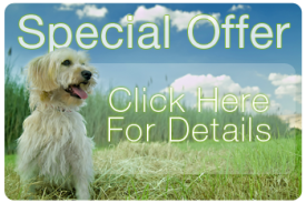 special_offer_vet.png
