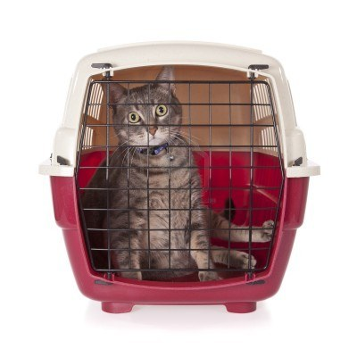 7019110_cat_closed_inside_pet_carrier_isolated_on_white_background.jpg