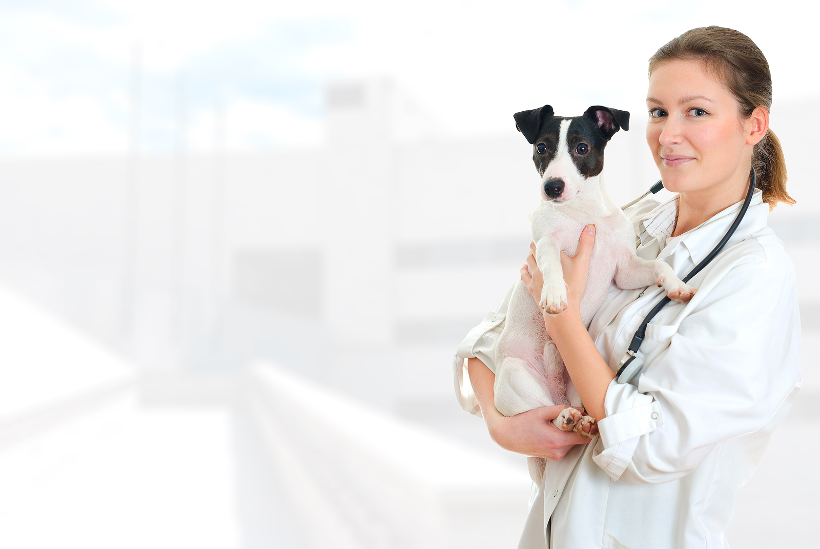 pet care services in burke, VA