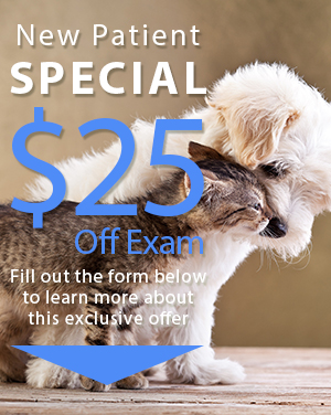 Oakland Animal Hospital New Patient Special001.png