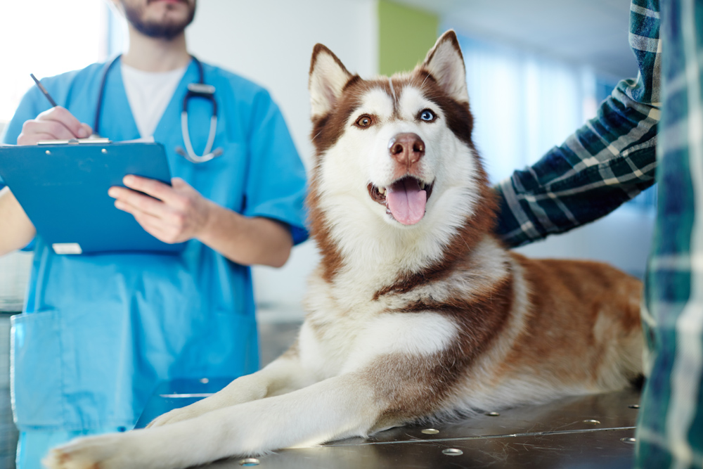 spay and neuter FAQs answered by our veterinarian in carol stream