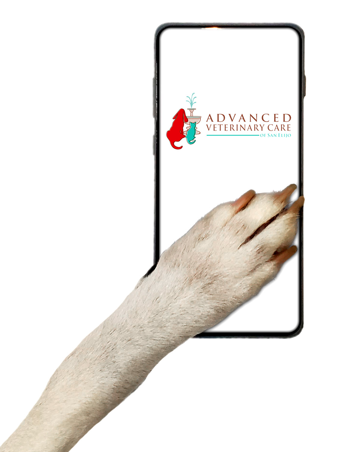 Veterinary Telemedicine Services: image of dog's paw on cell phone.