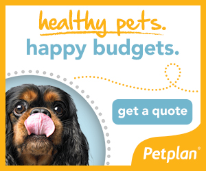 Pet plan Pet Health Insurance for dogs and cats.